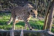 Firemní roční vstupenka do Zoo Praha