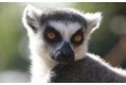 Jednorázová vstupenka do Zoo Praha pro studenta